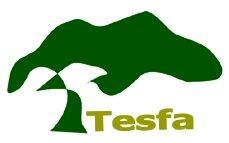 TESFA tree1.jpg