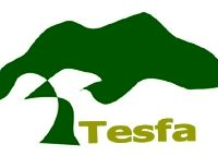 TESFA tree1.jpg